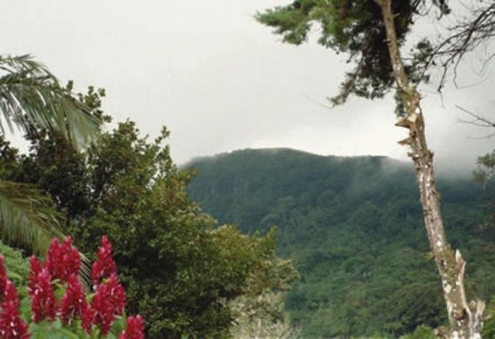 El_valle_rainforest_panama
